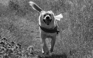 dog-1506233_960_720