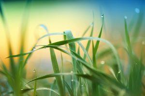 grass-3274686_960_720